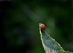 Höher geht es nicht! :-) Foto: J. Kruse